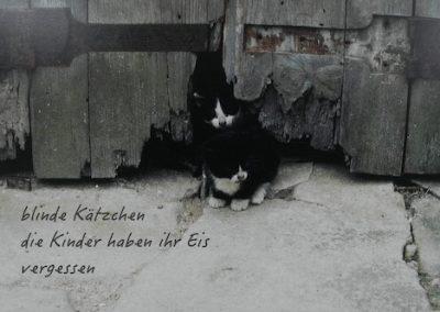 blinde Kätzchen