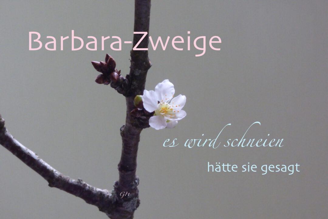 Barbara-Zweige