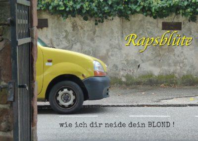 Rapsblüte