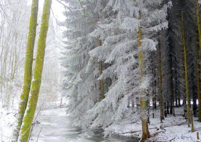 Winterlinge – Gedankenflocken